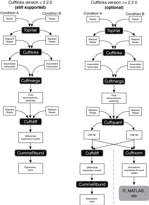 Seqacademy: an educational pipeline for rna-seq and chip-seq.